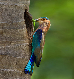 oiseau_ok